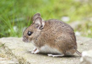 SUper pieges a souris